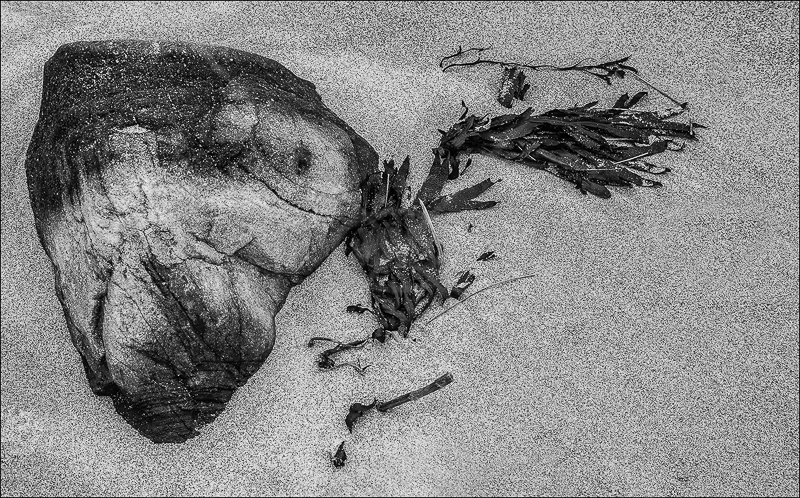 Fish Head Rock and Seaweed by Ian Griffiths - 1st (INT mono)