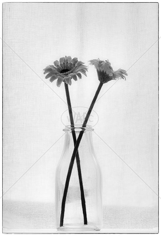 Milk Bottle Art by Irene Froy - 2nd (Adv mono)