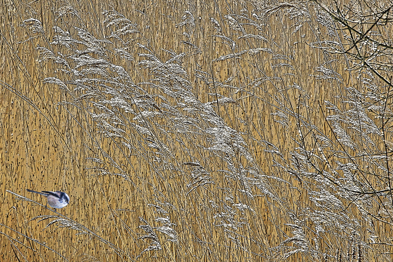 Reed Tapestry by Peter Hodgkison - 2nd (Int col)