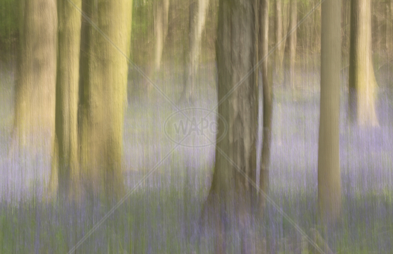 In the Woods by Sharon Leighton - 2nd (Int col)
