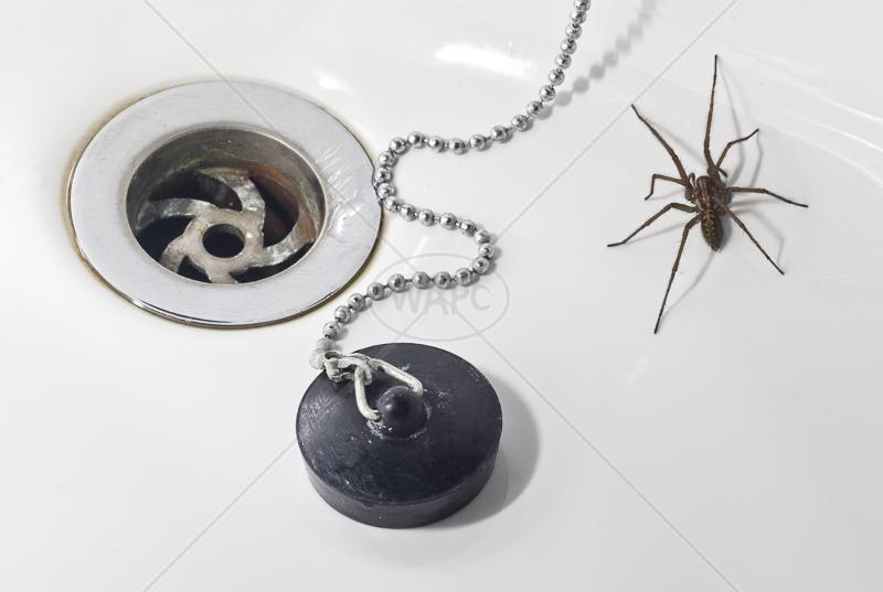 Bath Time by Peter Hodgkison - 1st (Int)