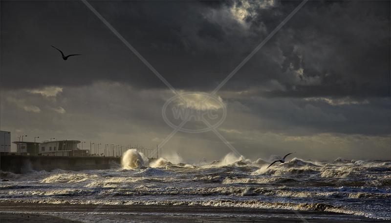 Rough Seas by Tony Thomas - C (Adv col)