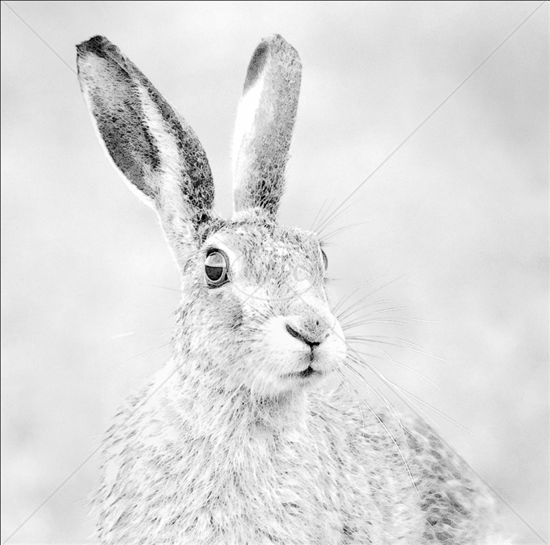 Mystical Hare by Audrey Price - 1st (Adv mono)