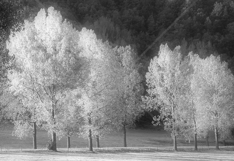 Tree Curve by Irene Froy - C (Adv mono)