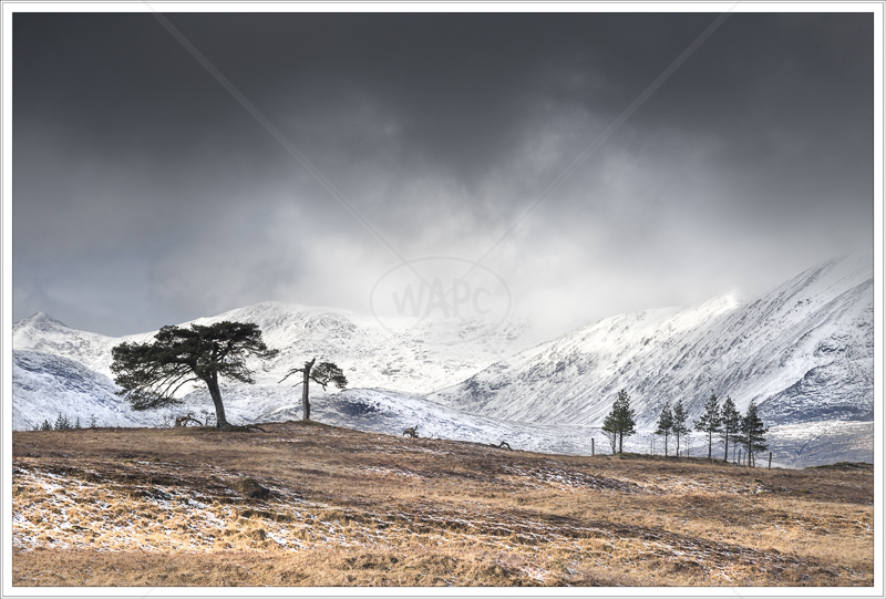 Snow on the Way by Jon Baker - 1st (Print)