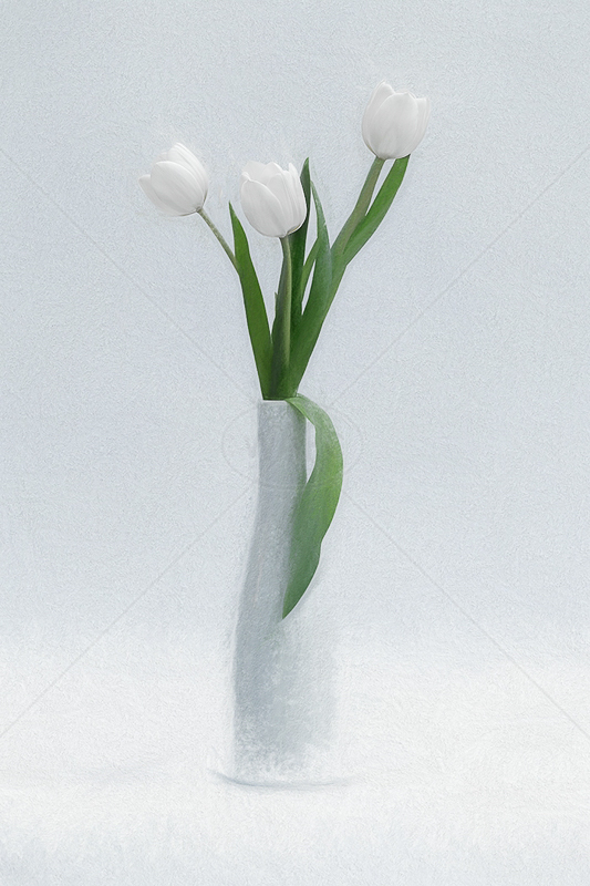 White Tulips by Norman O'Neill - HC (Adv col)
