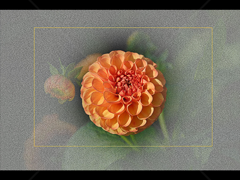 Dahlia by Ruth Holden - C (Int col)