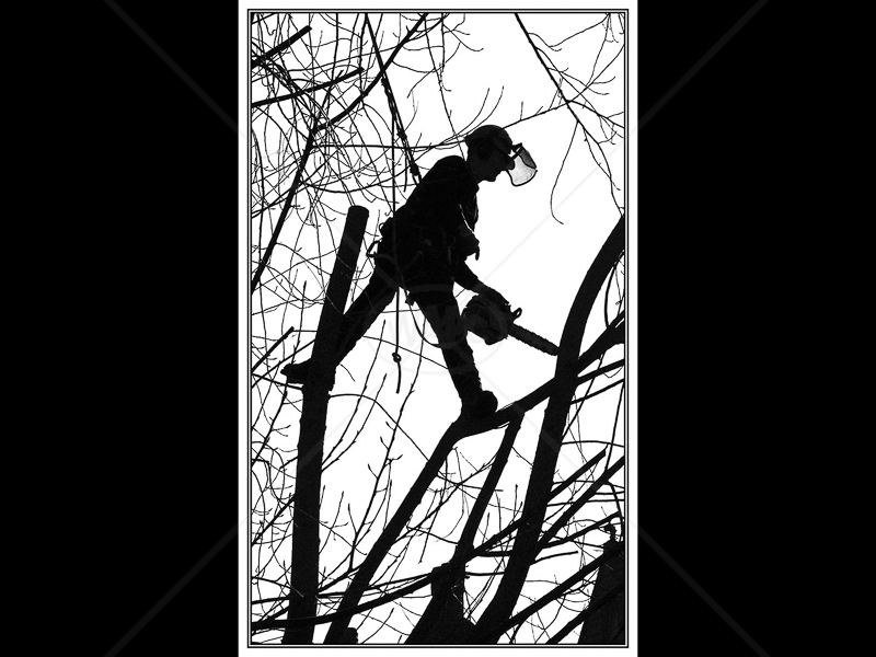 Arborial Man by Ruth Holden - 2nd (Int mono)