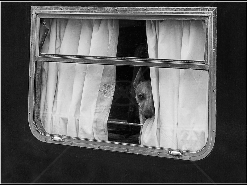 Curtain Twitcher by Ruth Holden - 1st (Int mono)