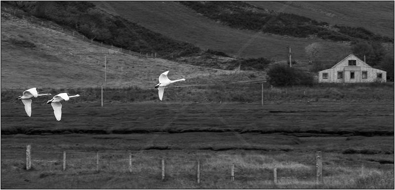 Homeward Bound by Ian Griffiths - HC (Int mono)