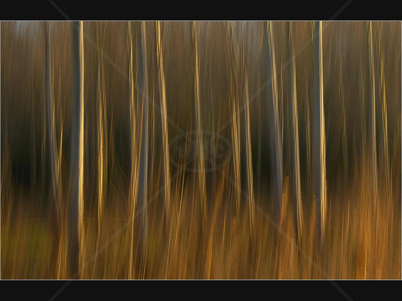 Autumn Sunshine by John Swannick - 1st (Adv)