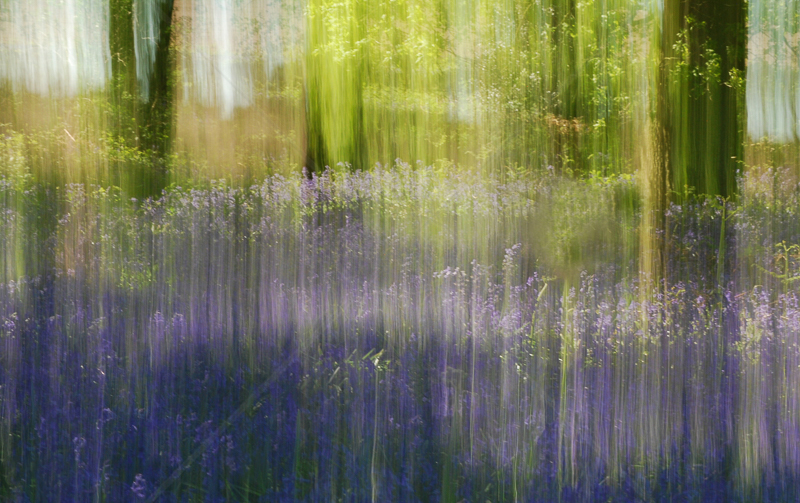 Bluebell Impressions by Dave Roberts - C (Int col)