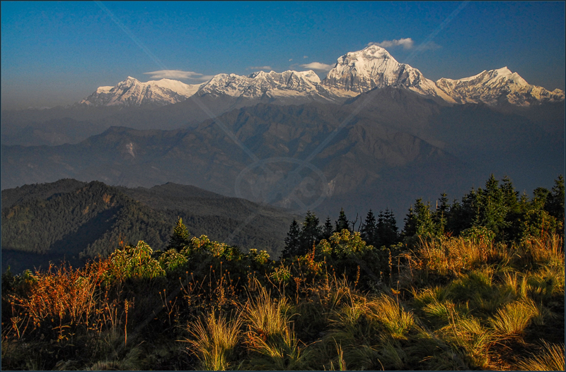 Dhaulagiri from Poon Hill, Annapurna, Nepal by Andy Udall - 2nd (Int)