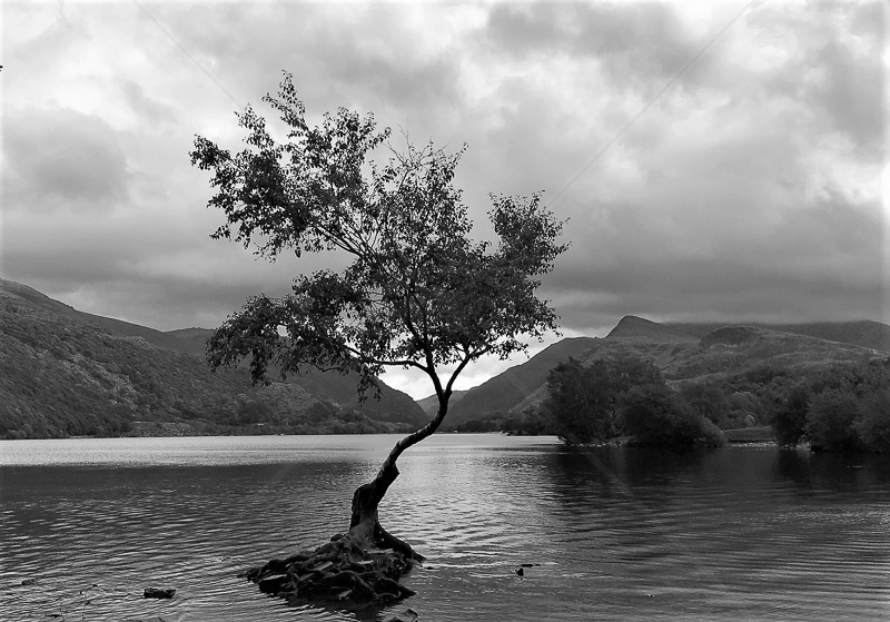 Lynn Padarn by Rachel Owen - C