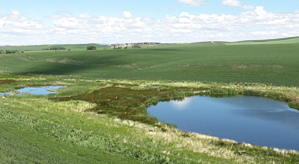 wetland-box-1024x990.jpg