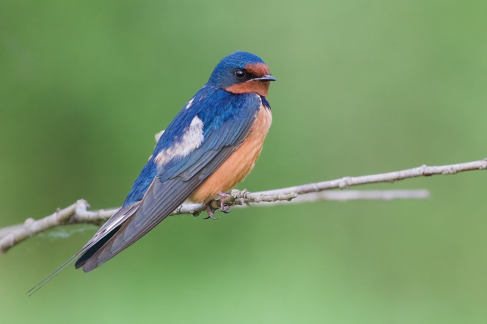 BIRDING -