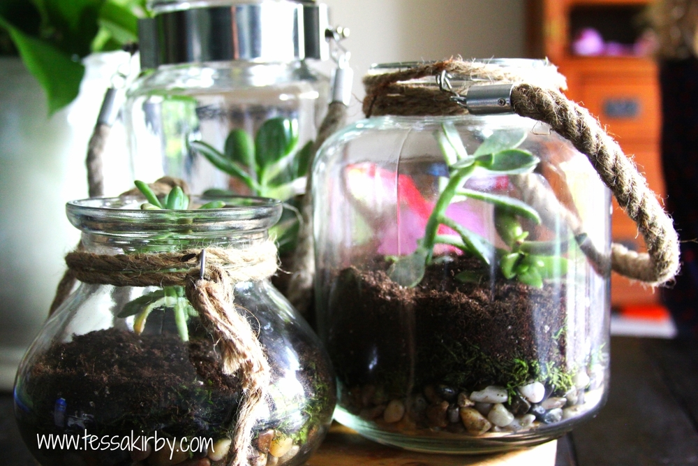 How To Build Your Own Succulent Terrariums