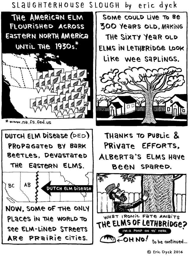 We begin our look at the European Elm Scale crisis in Lethbridge.  Thousands of trees in our urban forest impacted by the combined effects of a drought and an out of control insect population, thanks to a disastrously warm winter. I'd like to thank Kevin MacLean, Lyndon Penner and Jennifer Schmidt-Rempel for their help with these comics.  And of COURSE, my dear patrons.