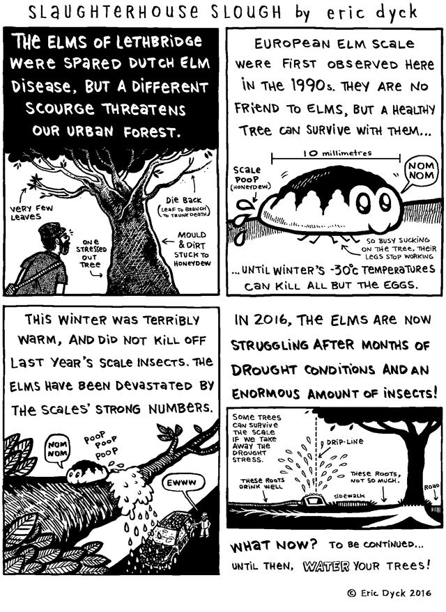 Part two of our look at the European Elm Scale crisis in Lethbridge.  Thousands of trees in our urban forest impacted by the combined effects of a drought and an out of control insect population, thanks to a disastrously warm winter.  I'd like to thank  Kevin MacLean ,  Lyndon Penner  and  Jennifer Schmidt-Rempel  for their help with these comics.  And of COURSE, my dear  patrons.