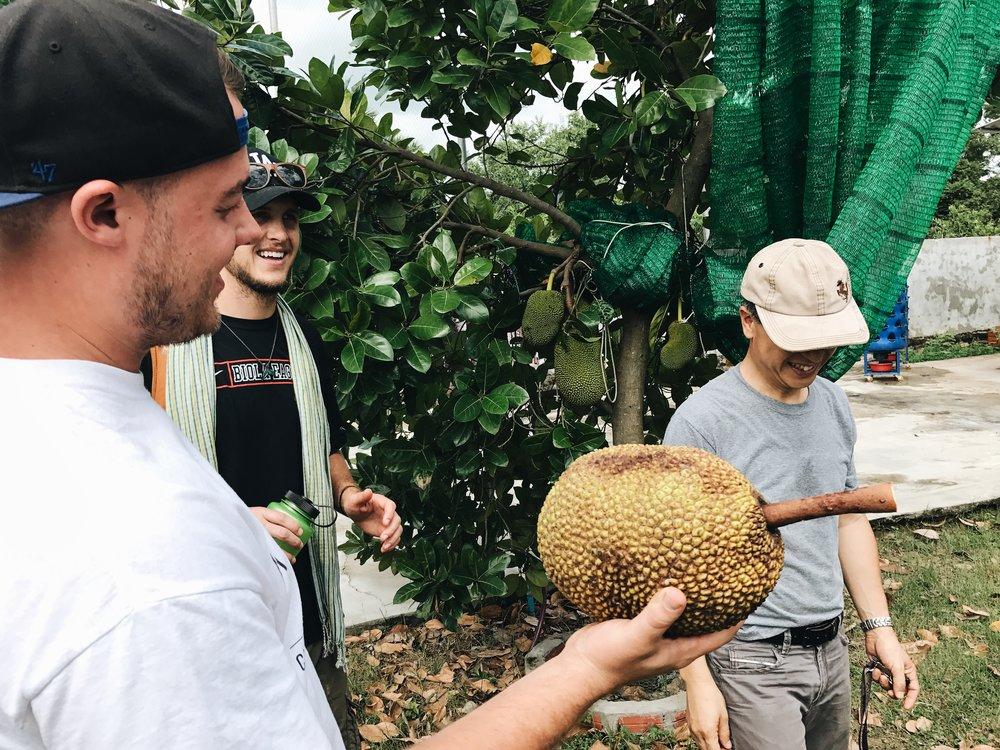 """Pictured above: Jackfruit the size of a basketball. This wasn't even """"big,"""" supposedly they can weigh upwards of 80 pounds."""