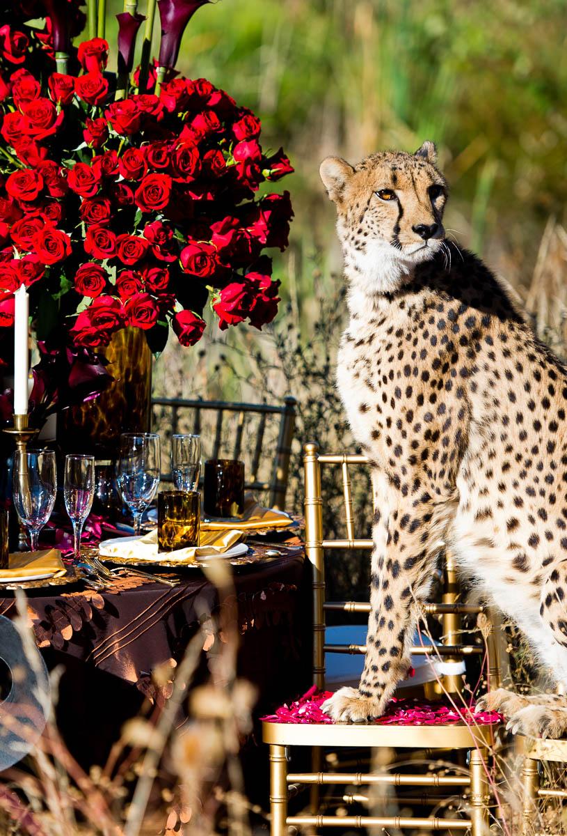 3710-cheetah-moscastudio-the-perfect-occasion-grace-ormonde-wedding-style-editorial-20160825-NOlogo.jpg