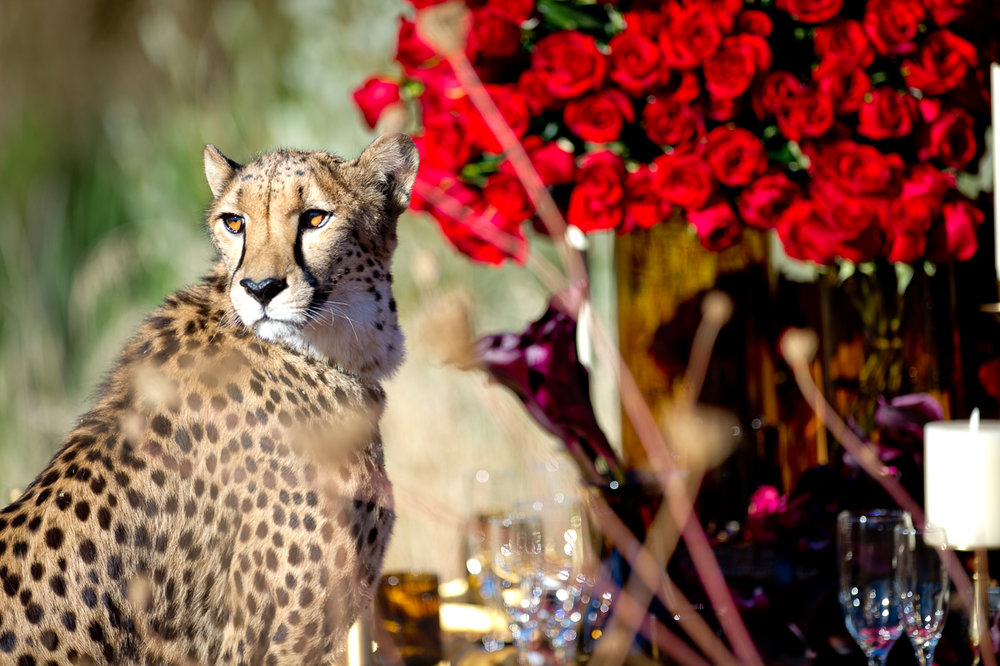 3720-cheetah-moscastudio-the-perfect-occasion-grace-ormonde-wedding-style-editorial-20160825-NOlogo.jpg
