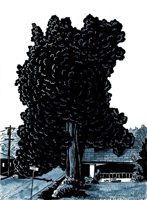 Buckman Tree