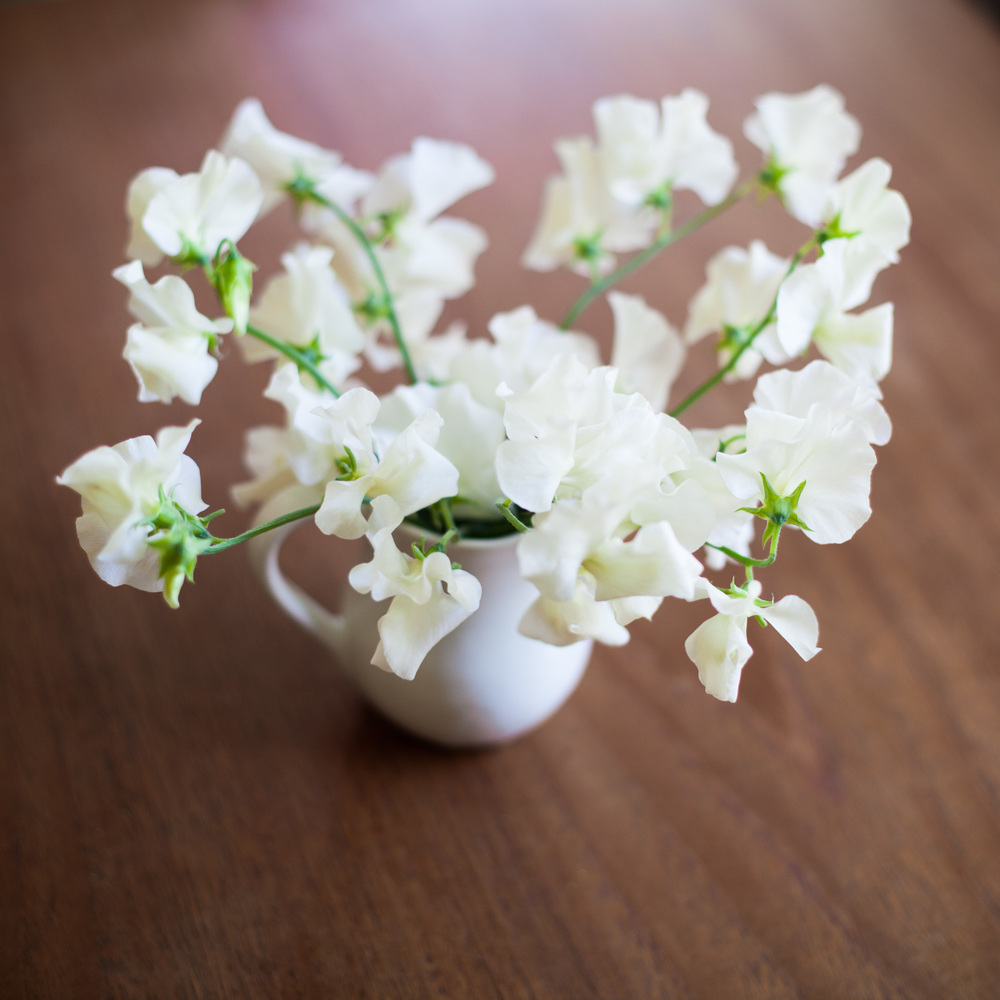 white-sweet-peas-in-small-jug-june-flowers