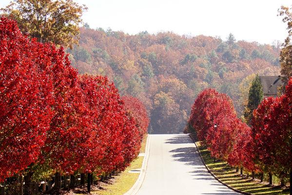 normal_red trees 1-2.JPG
