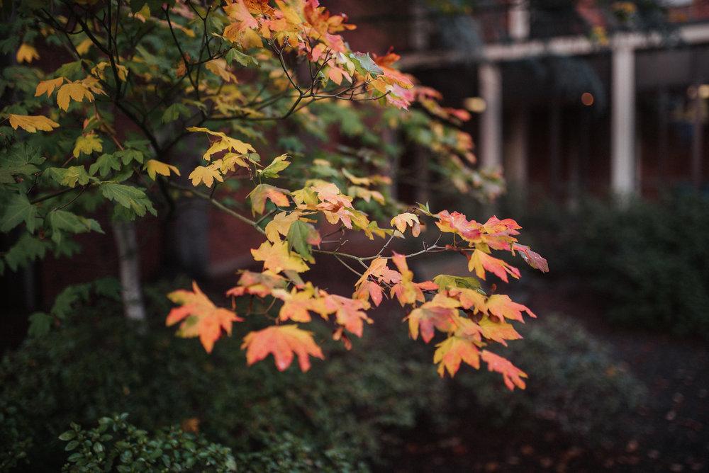 10.28.2018 Fall -4-X3.jpg