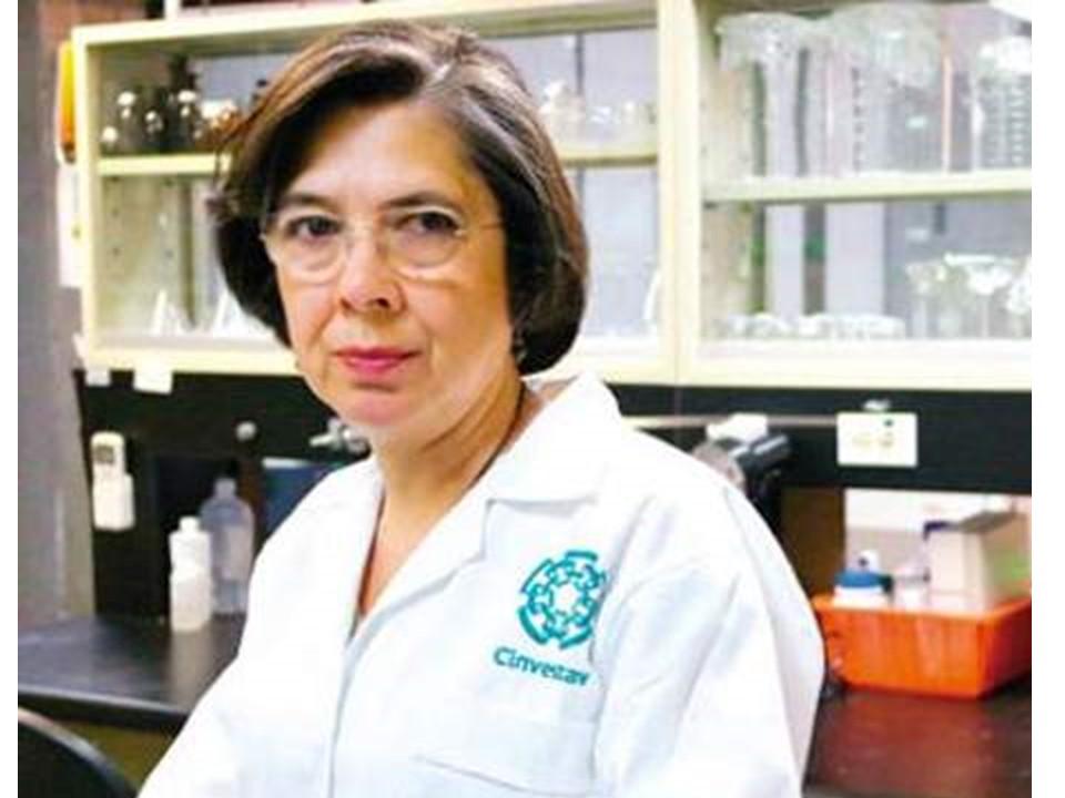 Dra.   Luisa Rocha  Email:  lrocha@cinvestav.mx  Tel:+52 (55) 5483-2859