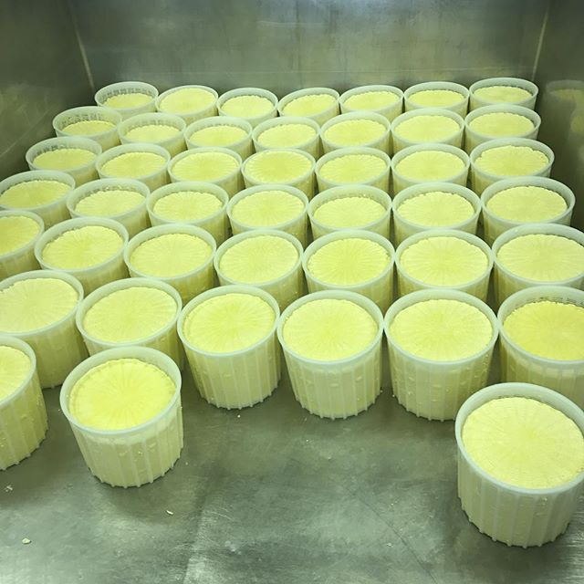 Today batch of Tomina Vecchia turned out great! Wheels are pressed and tucked in for the night. Tomorrow is time for salting!!👍🧀 #Lovera's market #loverascheese #handcrafted #handcraftedcheese #localfood #localcheese #artisan #artisancheese #oklahomamade #mio #foodies #cheeslover #cheeselove #foodblogger