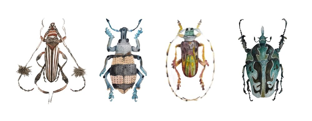 insect beetle watercolors