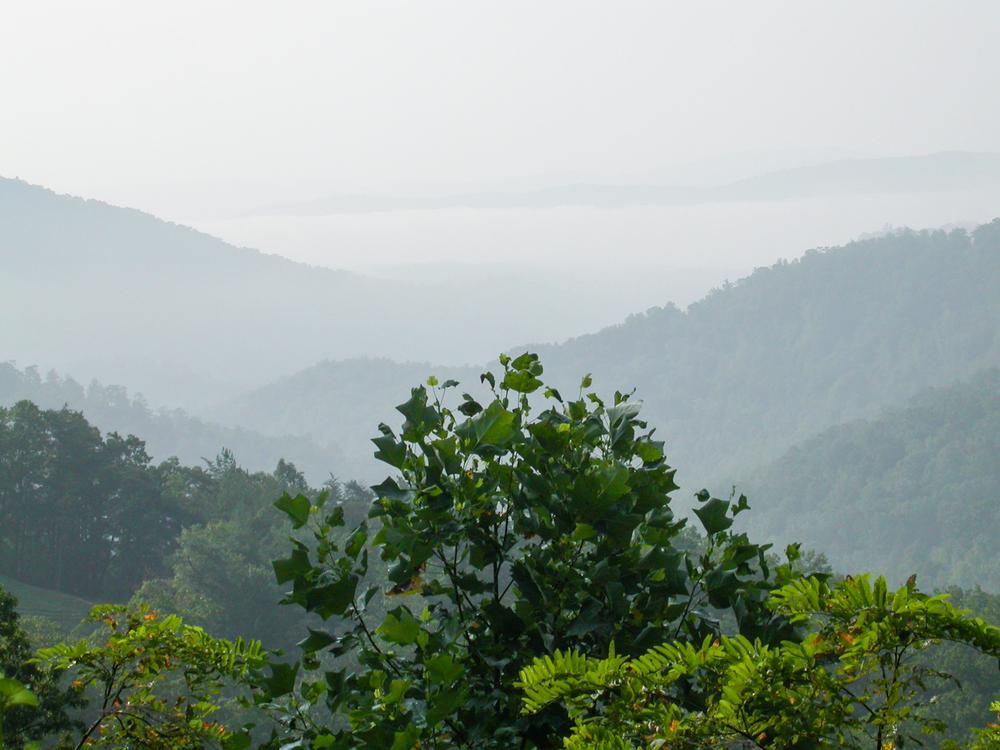 View from Elk RidgeRoad