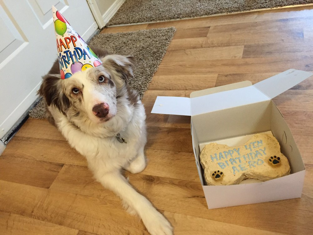 They Provided Excellent Customer Service On The Phone Great In Person And Time Delivery My Dog Really Seemed To Enjoy His Birthday Cake