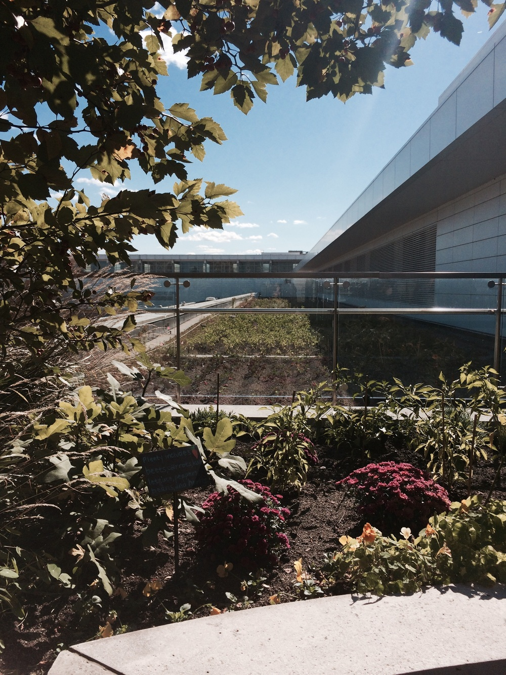 McCormick rooftop garden.