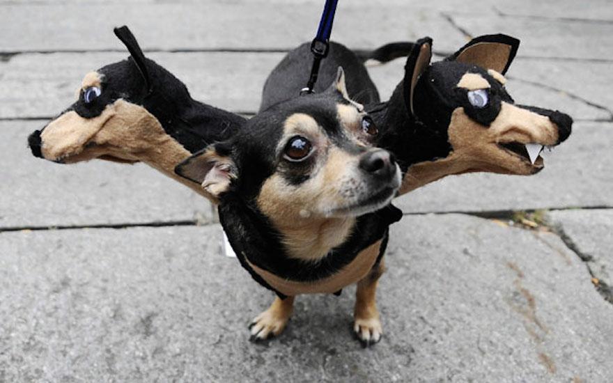 pet-halloween-costume-271__605.jpg
