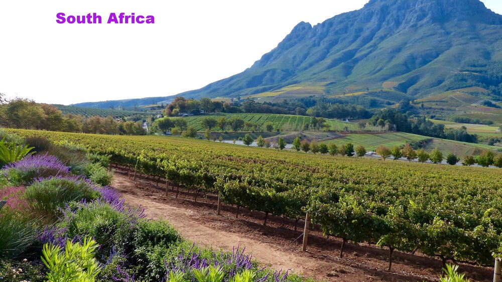 stellenbosch-winery-vineyard-south-africa.jpg