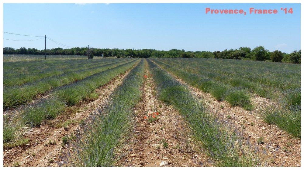 provence-france-lavender.jpg