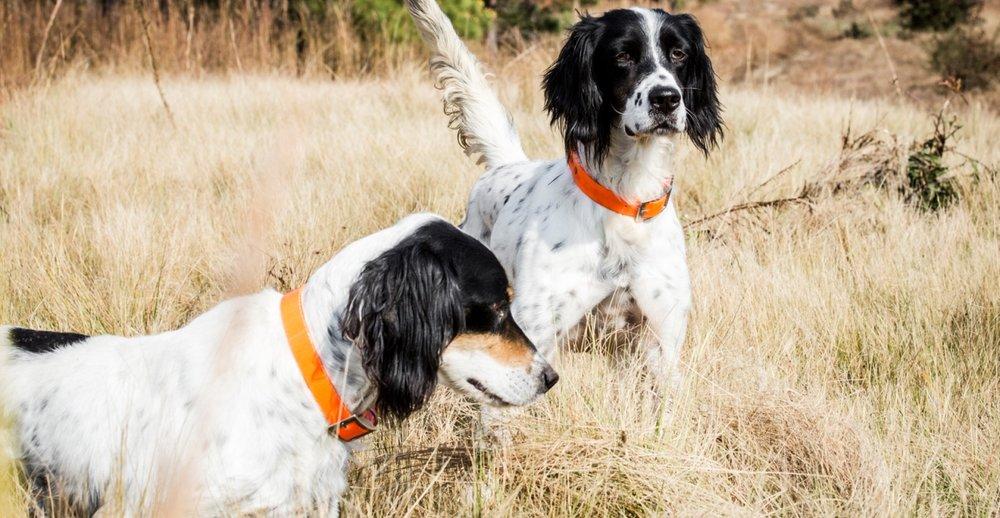 barnsely-garden-hunting-dogs-travel.jpg