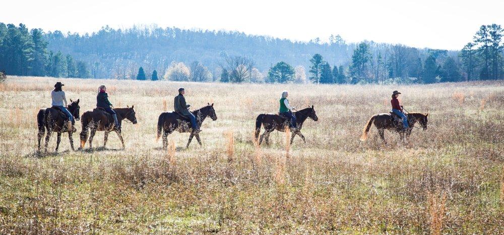 barnsley-meadow-horses-adventure-travel.jpg