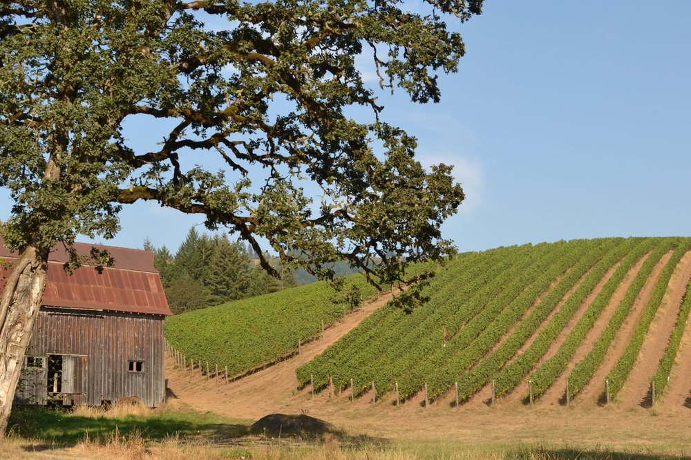 oregon-wine-country.jpg