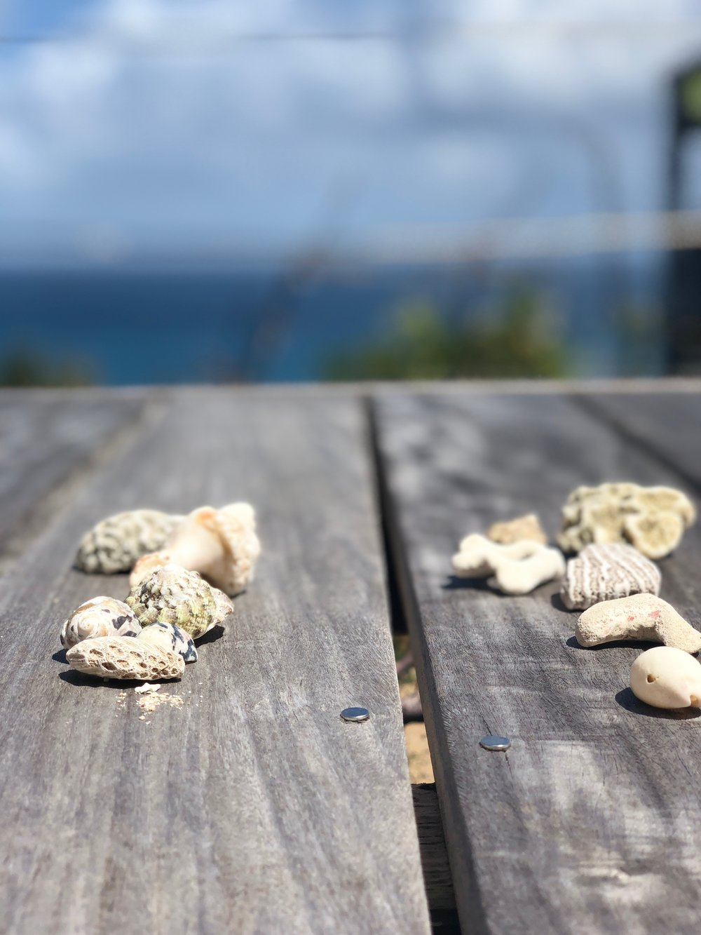 shells-beach-vacation.jpg