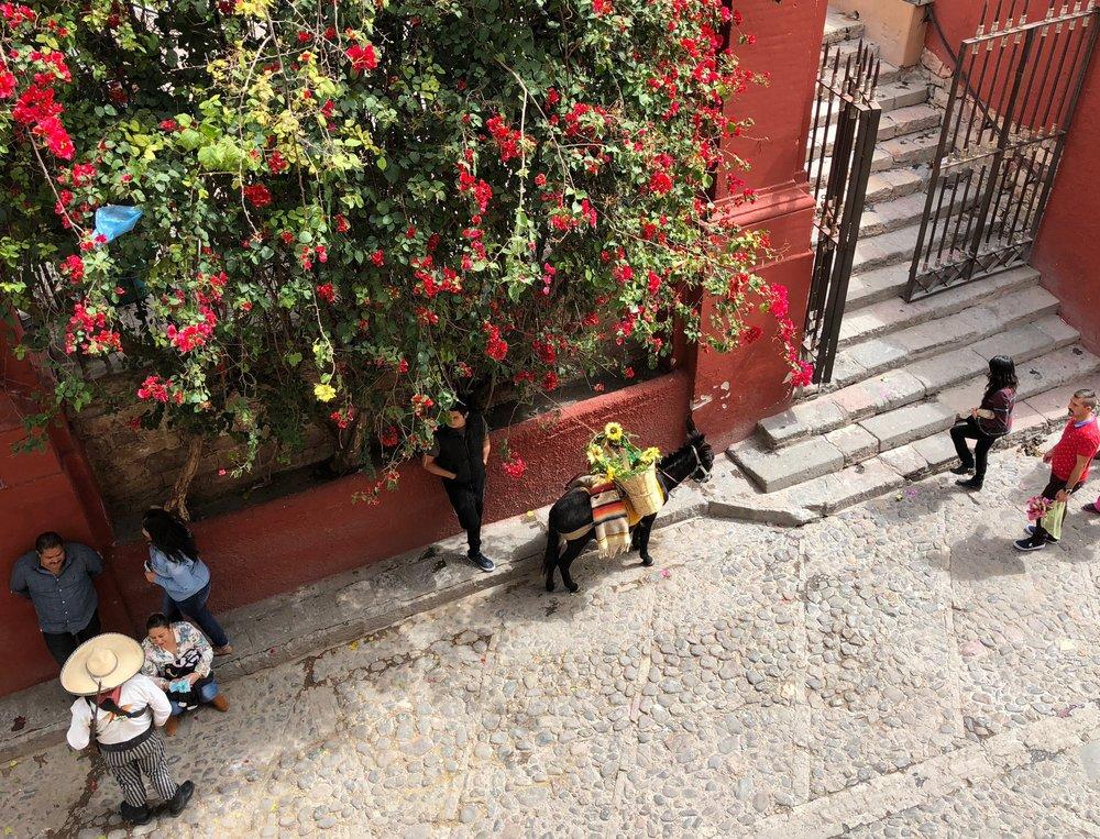 mexico-san-miguel-street-scene.jpg