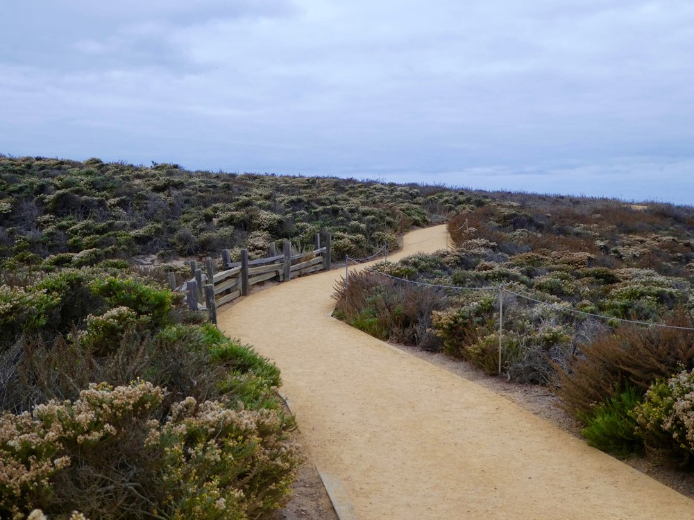 point-lobos-park-big-sur.jpg