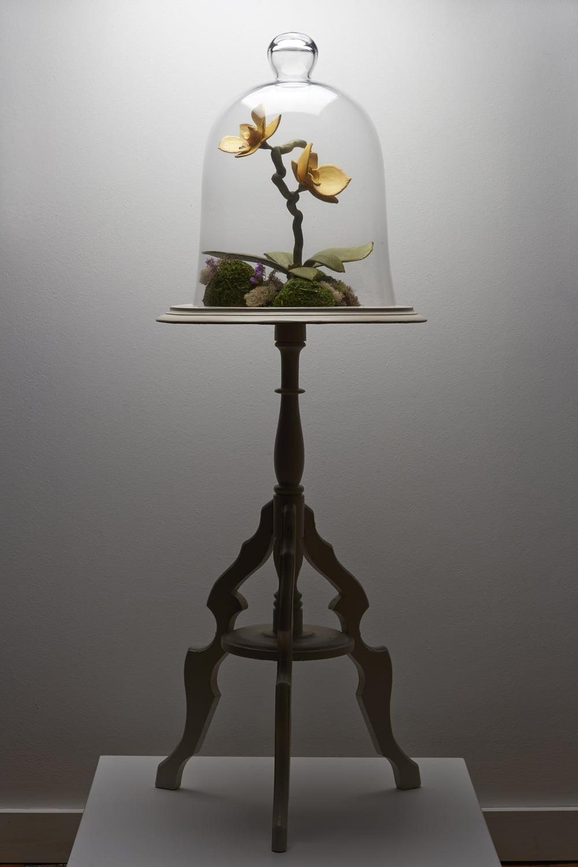 Lacrimal Lake Orchidaceae