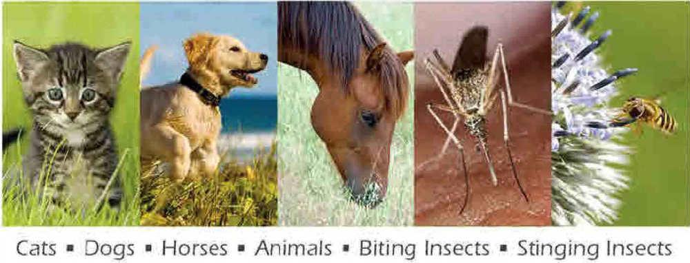 pic animal insect pics.jpg