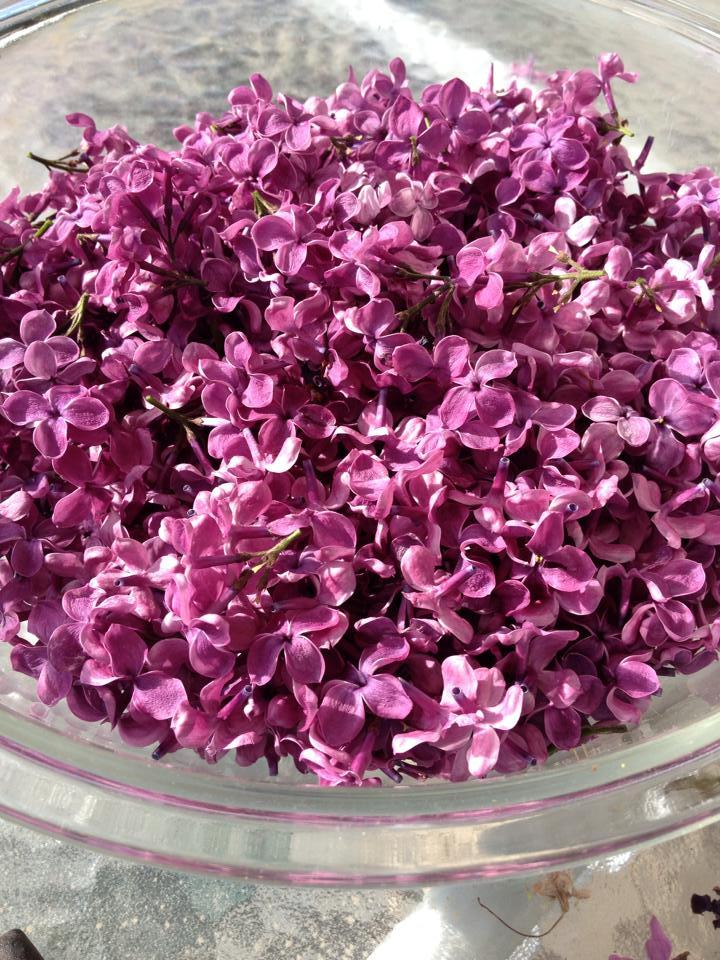 Lilac syrup, saragalactica.com