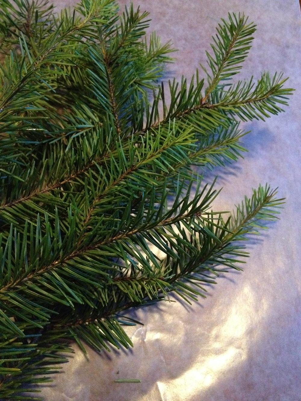 Recipe: Douglas-fir syrup. | saragalactica.com