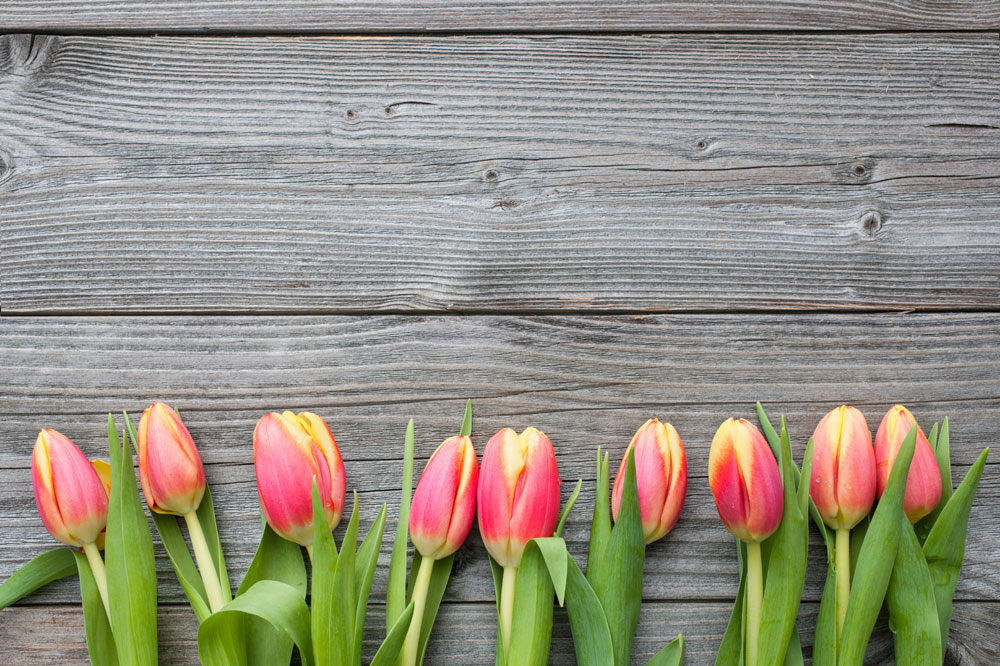 stock-photo-46617630-fresh-tulips-arranged-on-old-wooden-backgroun.jpg